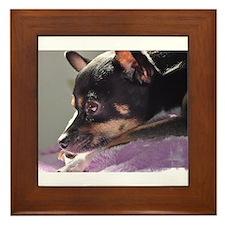 Chihuahua dog thinking Framed Tile