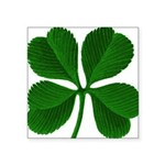 """clover2.png Square Sticker 3"""" x 3"""""""