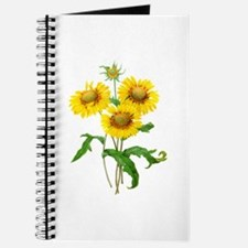 Gaillardia or Sunflowers by Redoute Journal