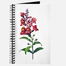 Antirrhinum or Snapdragons by Redoute Journal