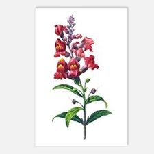 Antirrhinum or Snapdragons by Redoute Postcards (P