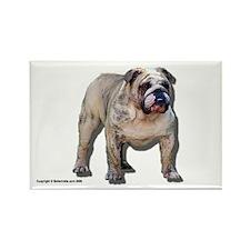 Bulldog Magnet Tyson