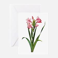 Gladiolus Laccatus By Pierre Joseph Redoute Greeti