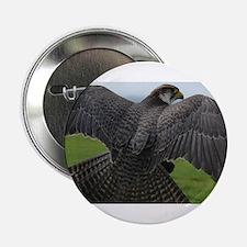 """Peregrine Falcon 2.25"""" Button"""