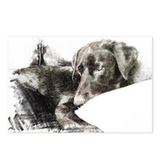 Sweet Labrador Postcards (Package of 8)