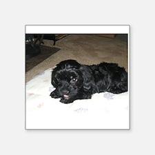 Adorable Puppy Sticker