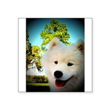 Chi Samoyed Sticker