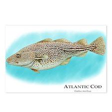 Atlantic Cod Postcards (Package of 8)