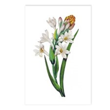 Tuberosa by Pierre Joseph Redoute Postcards (Packa