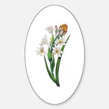 Tuberosa by Pierre Joseph Redoute Decal