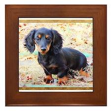 Cute Black dachshund Framed Tile