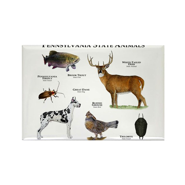 Pennsylvania State Animals Rectangle Magnet by WildlifeArts2