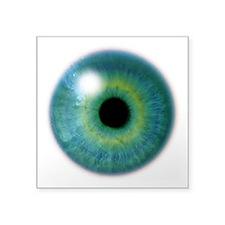 Big Eye Oval Sticker