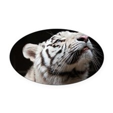 Look to the Light Oval Car Magnet