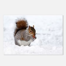 Squirrel in the snow Postcards (Package of 8)