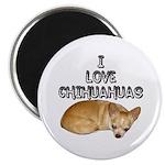 Chihuahua Kiki Magnet