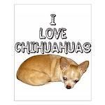Chihuahua Kiki Small Poster