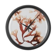 Irish moss seaweed - Large Wall Clock