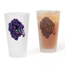 RNA polymerase alpha subunit - Drinking Glass