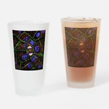 Mitosis, fluorescence micrograph - Drinking Glass
