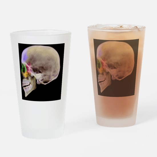 Paranasal sinuses, X-ray - Drinking Glass