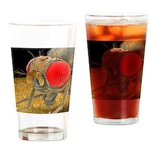 Fruit fly, SEM - Drinking Glass