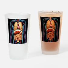 Human anatomy, artwork - Drinking Glass