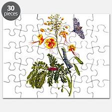 Maria Sibilla Merian014 copy.png Puzzle
