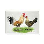 Norwegian Jaerhons Chickens Rectangle Magnet (100