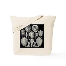 Haeckel Trilobites Tote Bag