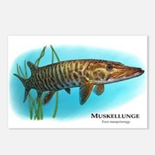 Muskellunge Postcards (Package of 8)