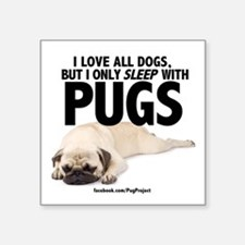 I Sleep with Pugs Sticker