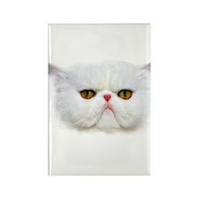 Grumpy Cat Rectangle Magnet (10 pack)
