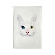 White Cat Rectangle Magnet (10 pack)