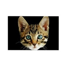 Kitty Cat Face Rectangle Magnet (10 pack)