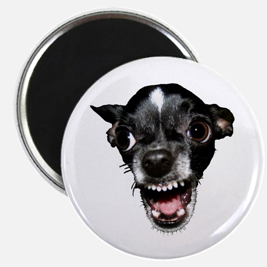 Vicious Chihuahua Magnet