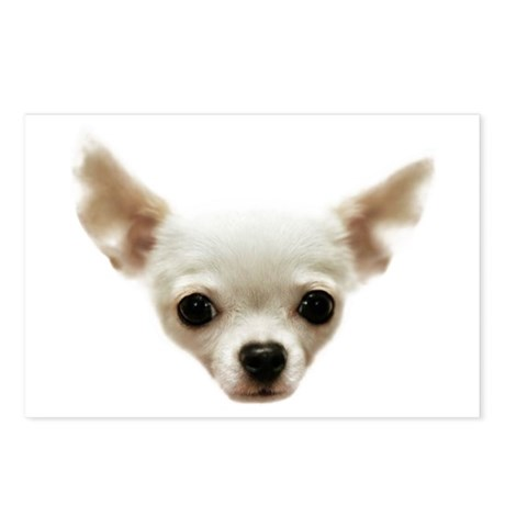 White Chihuahua Postcards (Package of 8)