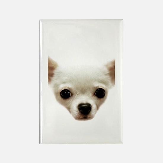 White Chihuahua Rectangle Magnet