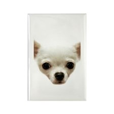 White Chihuahua Rectangle Magnet (10 pack)