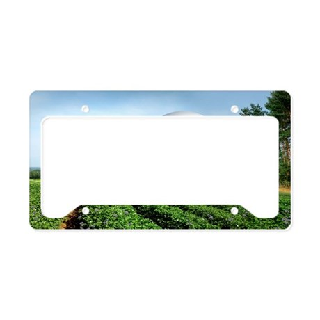 image - License Plate Holder