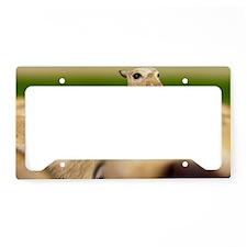 Macrauchenia - License Plate Holder