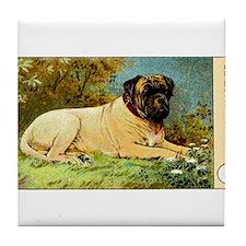 Antique 1908 English Mastiff Dog Cigarette Card Ti