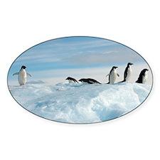 Adelie penguins - Decal