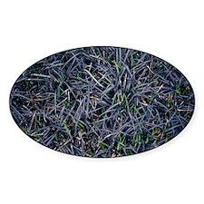 Black Mondo grass - Decal