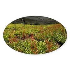 Bromeliads being cultivated - Decal