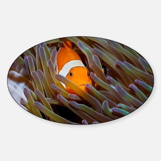 Anemonefish in anemone - Sticker (Oval)