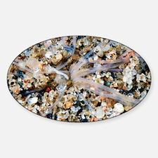 Amphitrite worm - Decal