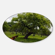Cattle under a holm oak tree - Decal