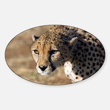 Cheetah - Decal