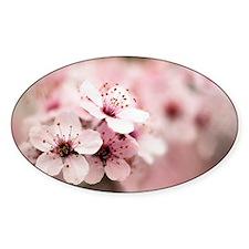 Cherry Plum (Prunus ceracifera) - Decal